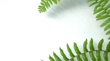 Green swaying fern leaves on white background