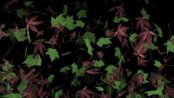 animación de fondo de otoño de hojas de arce cayendo
