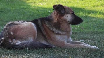 unschuldiger streunender Hund, der im Gras sitzt