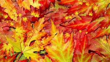 loop de fundo de folhagem de outono