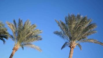 Palm trees against a blue sky video