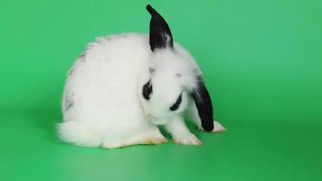 conejo blanco sobre fondo verde