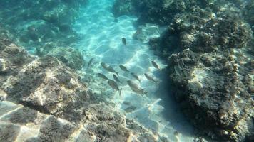 Fish school on reef 4K