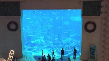 Families Viewing Large Resort Aquarium Tank 4K video