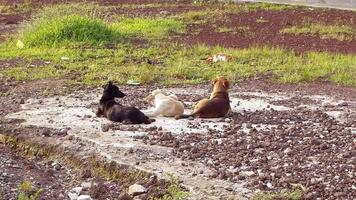 três cachorros descansando em um parque