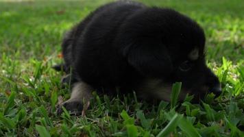 cucciolo carino dormire su un campo in erba nel parco video