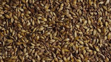 dose rotativa de cevada e outros ingredientes de fabricação de cerveja - fabricação de cerveja 094