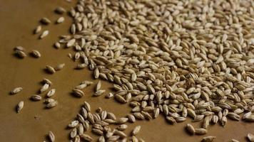dose rotativa de cevada e outros ingredientes de fabricação de cerveja - fabricação de cerveja 119