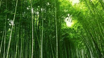 arashiyama bambus no japão.