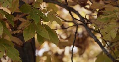 foto relaxante de folhas verdes manchadas movidas pelo vento no fundo desfocado da floresta em 4k