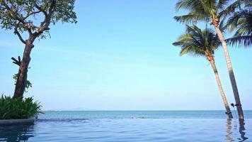 piscina infinita com palmeiras video
