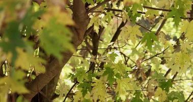 natürlich fokussierte und defokussierte Flugzeuge mit Zweigen und Blättern in 4k video