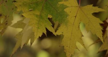 close up de algumas folhas amarelas com fundo de floresta desfocado em 4k