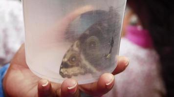 Butterfly In A Container