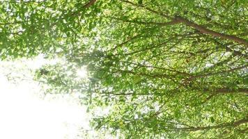 el sol a través del árbol