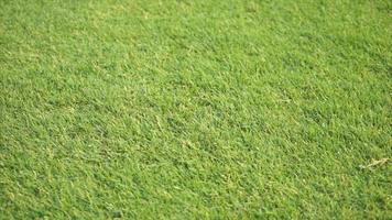 Schwenken über den grünen Rasen