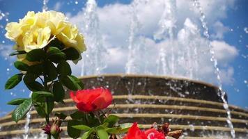 Rosen und der Brunnen video