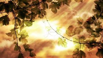 laço de folhas de videira rústica video