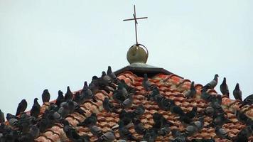 o telhado da igreja e pássaros
