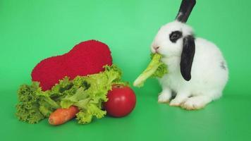 coelho branco comendo alface e cenoura