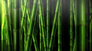 fundo de selva de bambu video