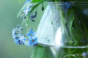 vase with forget-me on the window