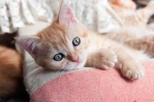red kitten with green eyes lying on the bedspread photo