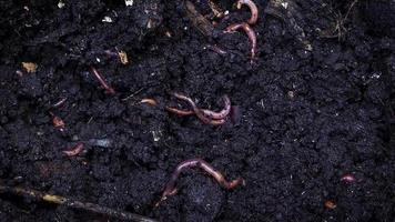 Compost With Earthworms video