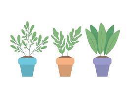 Plantas aisladas dentro de macetas de diseño vectorial