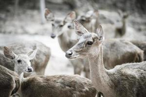Close up of deer herd. Animals concept.