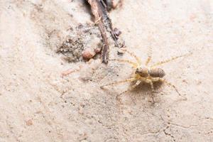 araña en el suelo