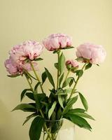 Vase of pink peonies photo
