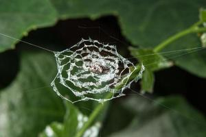 Spider in the spider web
