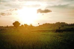 Golden hour on a grass field