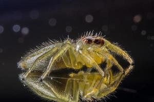 araña, foto de primer plano