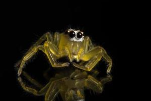 Spider on glass surface