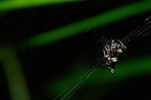 Spider in the spider web