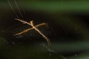 araña en la telaraña