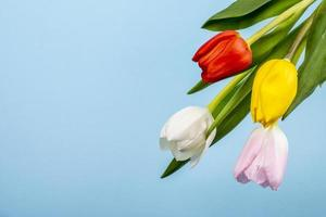 Top view of colorful tulips on blue background with copy space