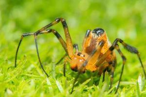 araña en la hierba