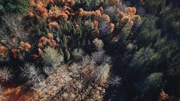 Aerial view of autumn trees photo