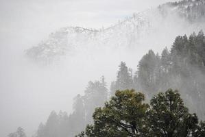 Trees in the snowy fog