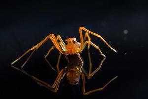 araña en la superficie del vidrio