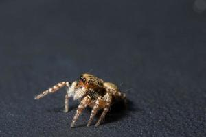 Spider, close-up photo