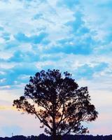 silueta de árbol durante el día