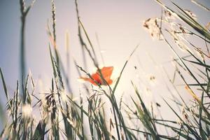 Orange flower surrounded by grass photo
