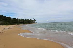 Green trees on a brown sandy beach