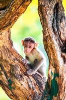 brown monkey on brown trunk
