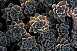 Close-up of succulents