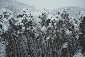 Trees covered with snow in stormy weather